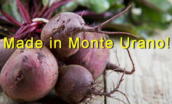 Monte Urano: coltivare rape rosse per la salute